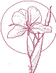 acupunctuur logo